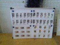Collection le Sucre (5)