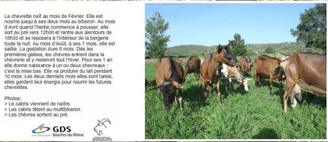 Les Chèvres du Brégalon