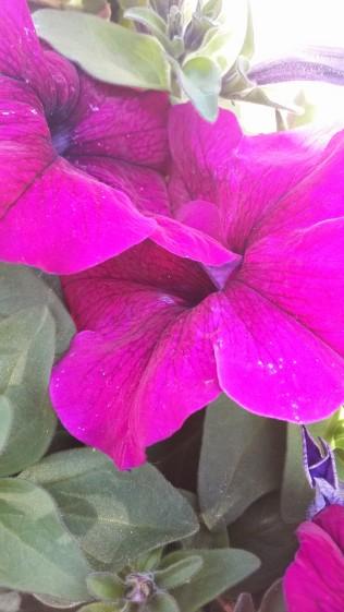 Fleurs du jardin 2014 (14)