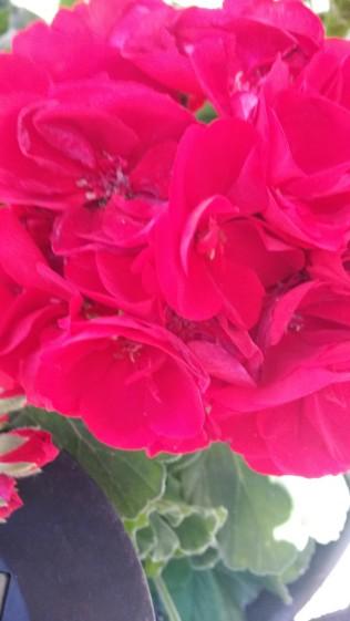 Fleurs du jardin 2014 (15)