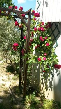 Fleurs du jardin 2014 (5)